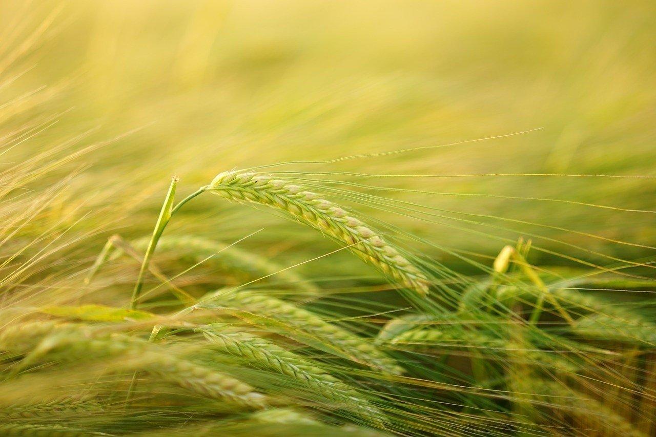 """Ogłoszenie o naborze wniosków o udział w programie """"Usuwanie folii rolniczych i innych odpadów pochodzących z działalności rolniczej"""""""